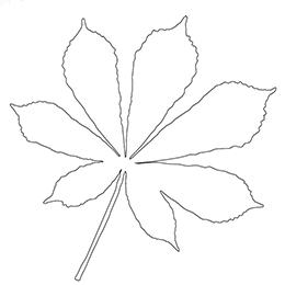Kolorowanka jesienna - liść kasztanowca