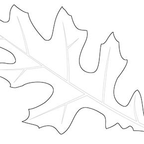 Kolorowanka jesienna - liść dębu błotnego